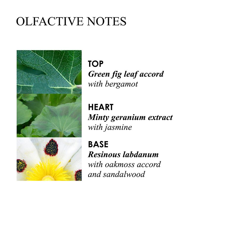 Molton Brown Geranium Nefertum Body Lotion